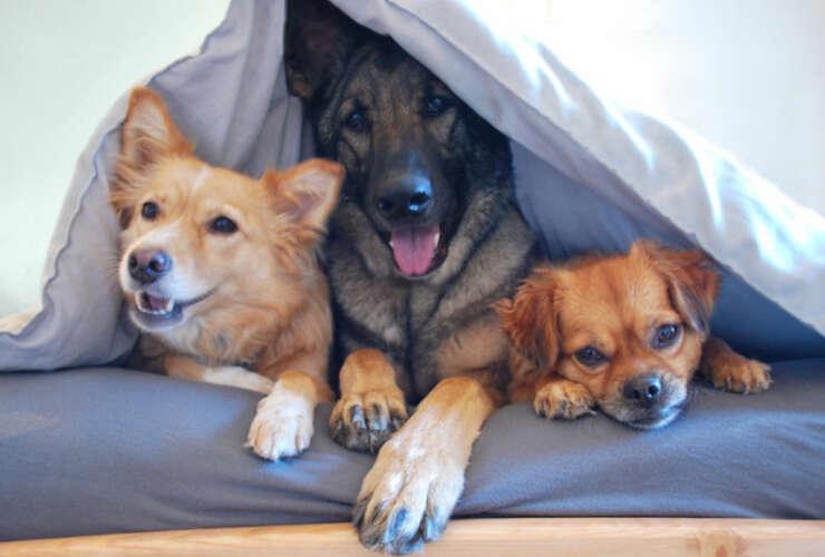 Dog Behavior Assistance